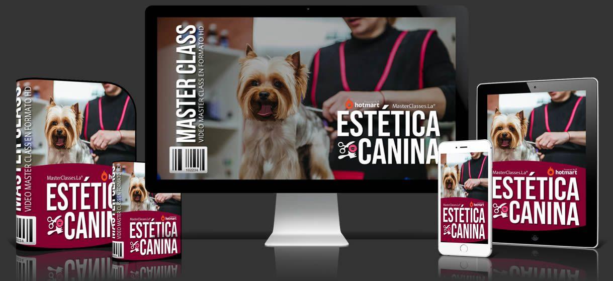 Cursos para Estética Canina