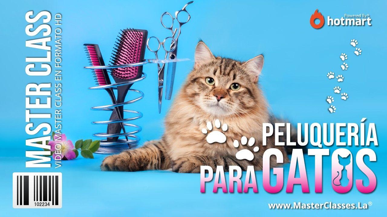 Curso Online de Peluquería para Gatos