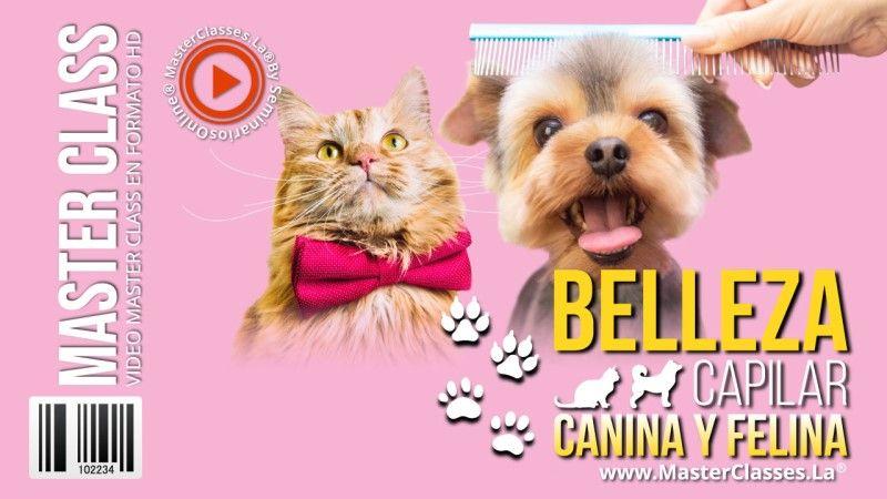 Curso de Belleza para Gatos y Perros