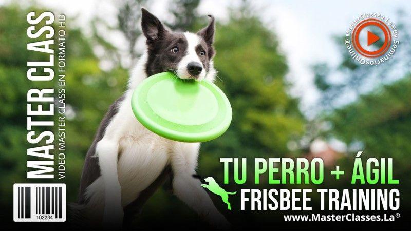 Curso Online para que mi perro sea más ágil