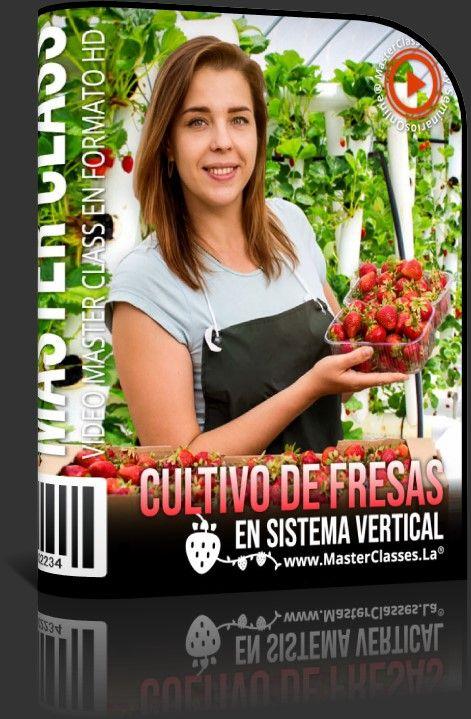 Cultivo de Fresas en Sistema Vertical