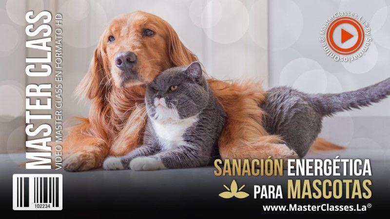 Curso de Sanación Energética para Mascotas