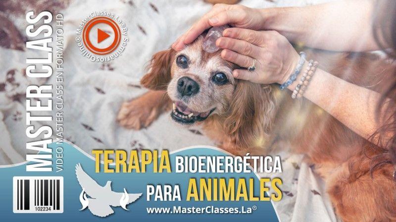 Curso Online Terapia Bioenergética para Animales